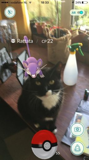 pokemon-go-cat